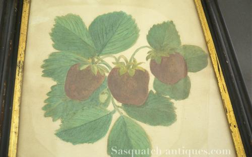 19th century pre Washington state territory watercolor botanical study of the Jucunda Strawberry dated 1878 for sale water color
